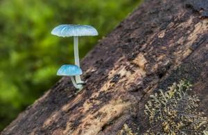 Macro_Fungi