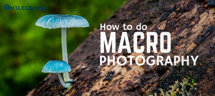 How to do Macro Photography
