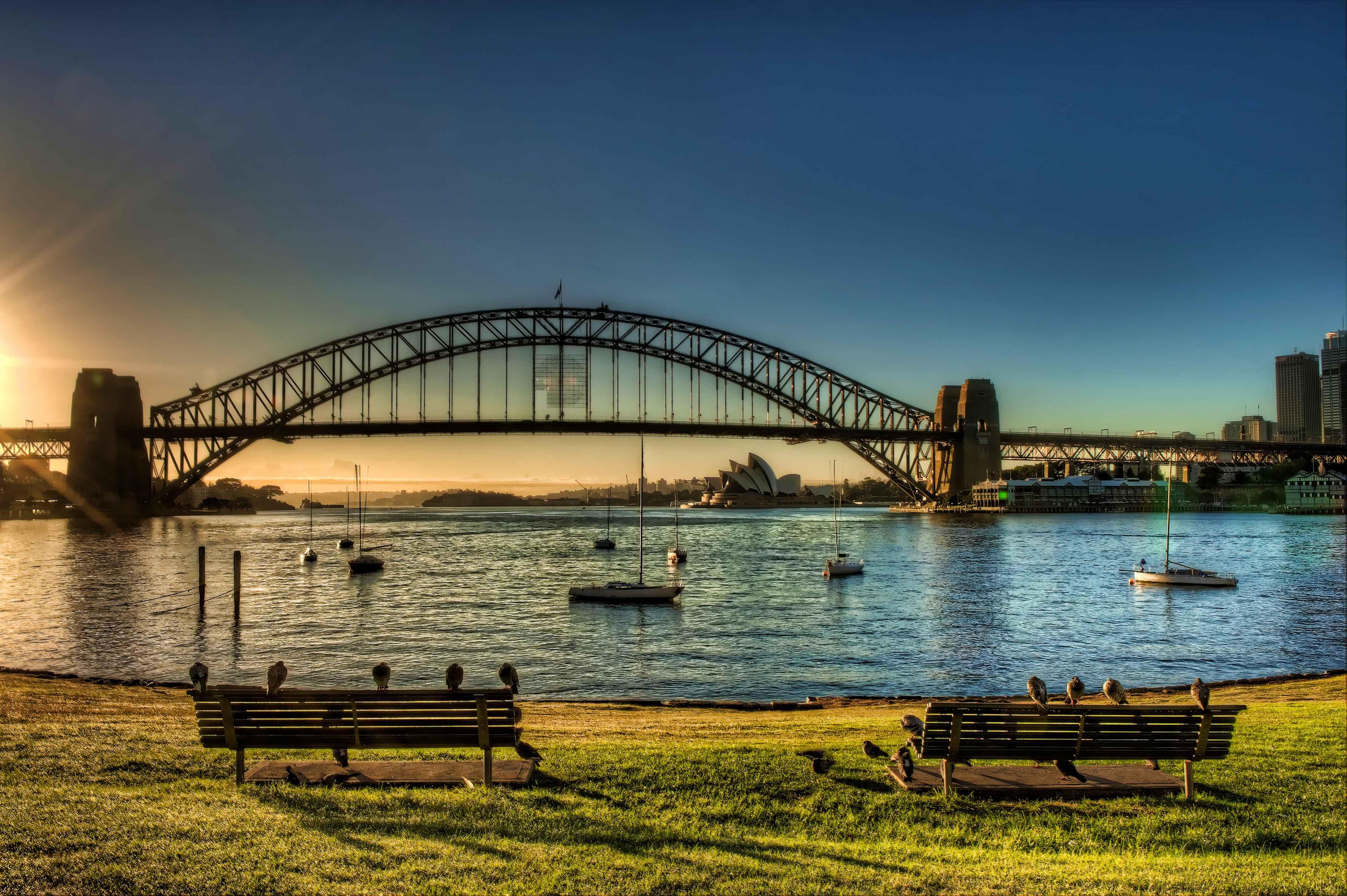 Sydney Harbour Sunrise pigeons